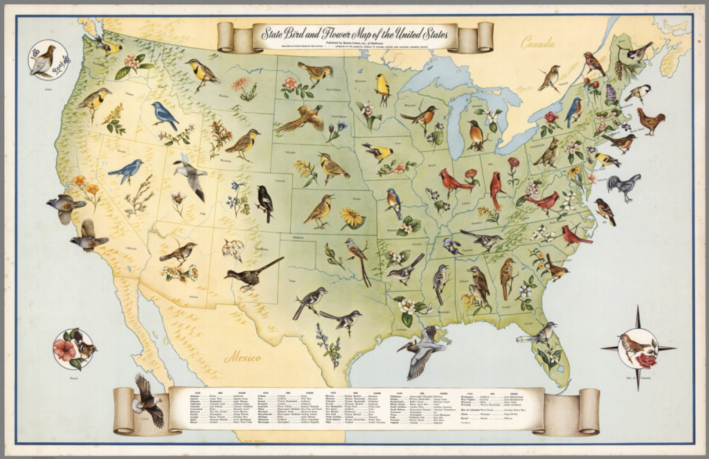 State Bird And Flower Map Of The United States. - David Rumsey | United States Quarter Map Printable